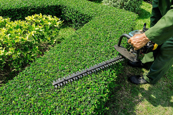 affordable garden services in northcliff melville - Garden Mainenance